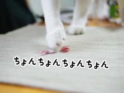 cat983