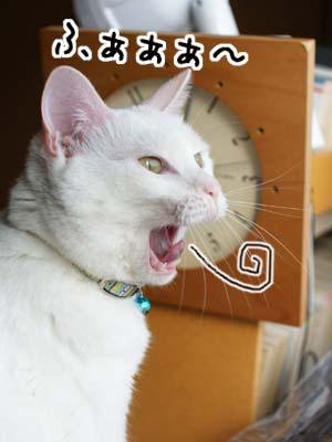 cat985