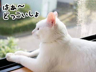 cat986