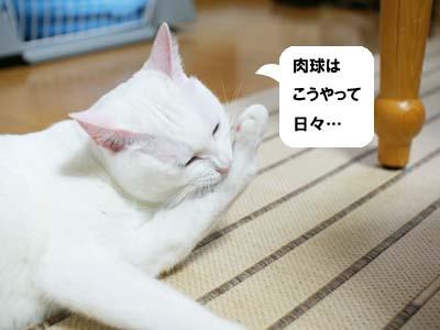 cat991