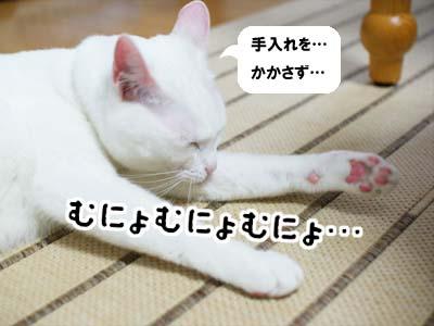 cat992
