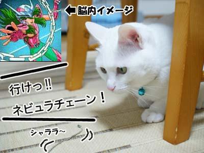 cat994