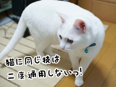 cat996