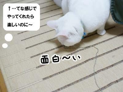 cat997