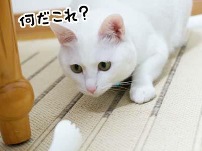 cat999