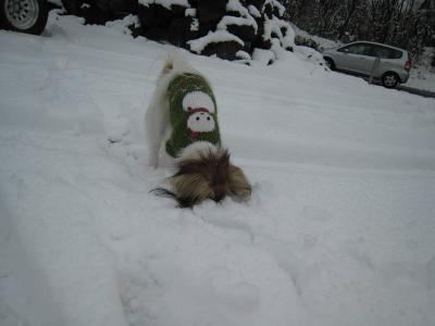 初めての雪 ④