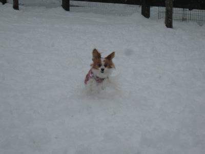 初めての雪 ⑦