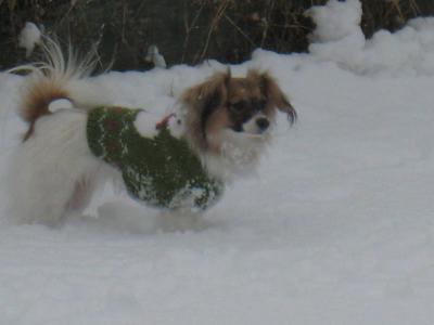初めての雪 ⑤
