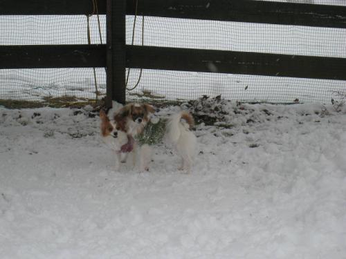 初めての雪 ⑥