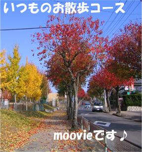 20061125194109.jpg