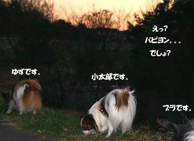 3wans1.jpg