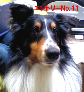 Q-11.jpg