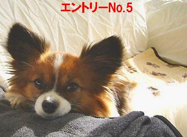 Q-5.jpg