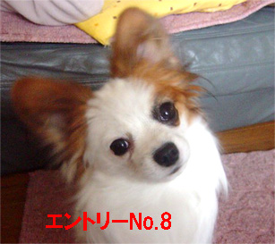 Q-8.jpg