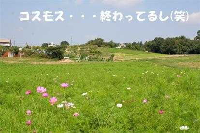 aiboku081004-3.jpg