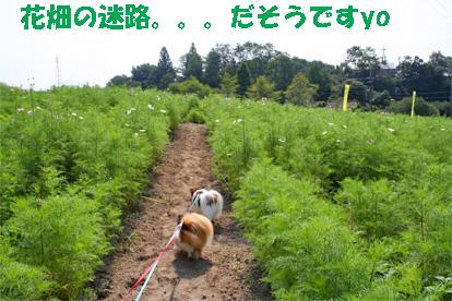 aiboku081004-4.jpg