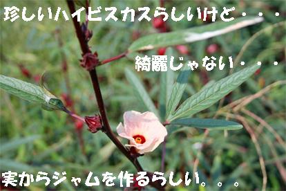 aiboku081004-5.jpg
