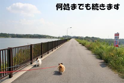 aichiike081008-2.jpg