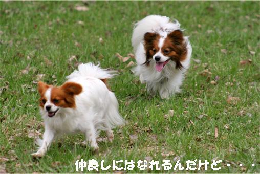 amikota090504-1.jpg