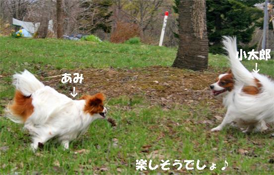 amikota090504-2.jpg