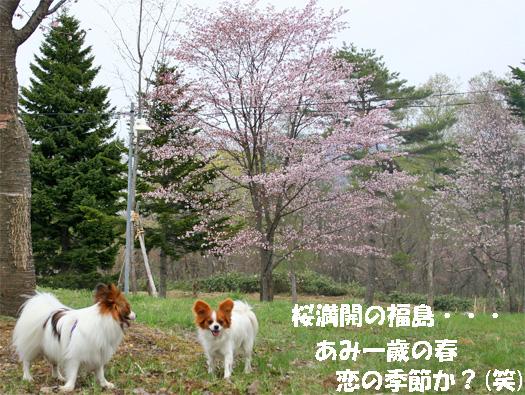 amikota090504-3.jpg