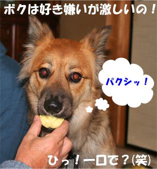 bady080107-1.jpg