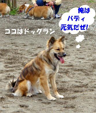 bady080411-1.jpg