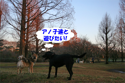 badymari080108-2.jpg