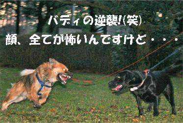 badymari080108-7.jpg