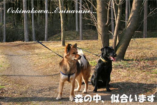 badymari090326-1.jpg