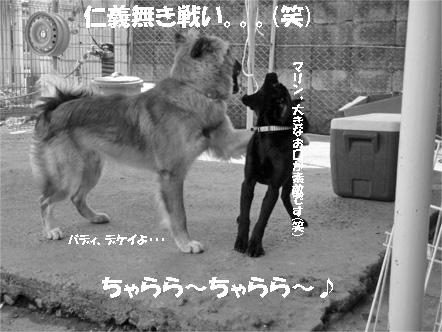 badymari5.jpg