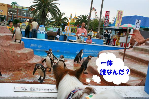beachland5_20090525102824.jpg