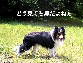bura060926-2.jpg