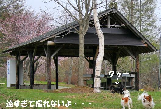 camp3_20090513113910.jpg