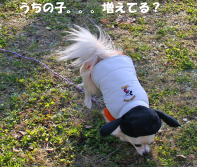 chiwa2.jpg