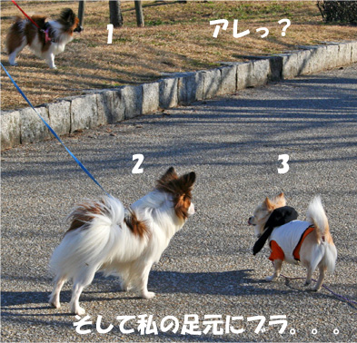 chiwa4.jpg