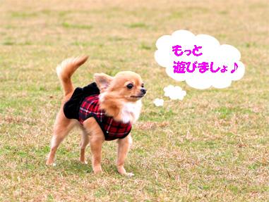 chiwa6.jpg