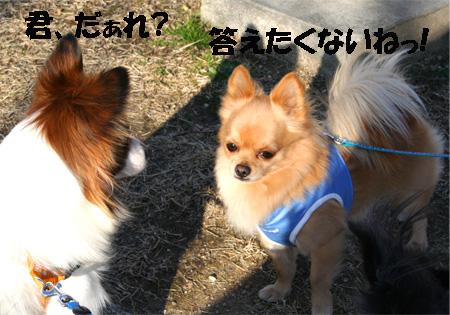 chiwawa11.jpg