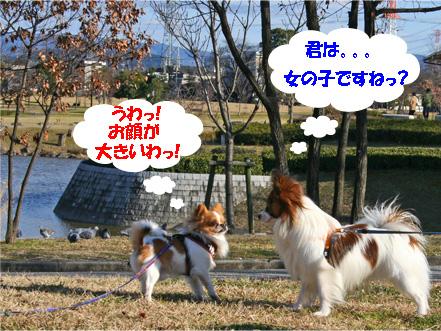 chiwawa12.jpg