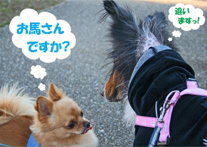 chiwawa13.jpg