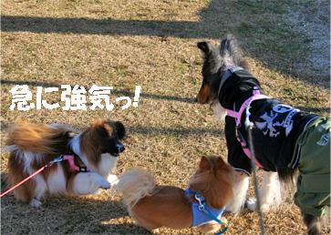 chiwawa14.jpg