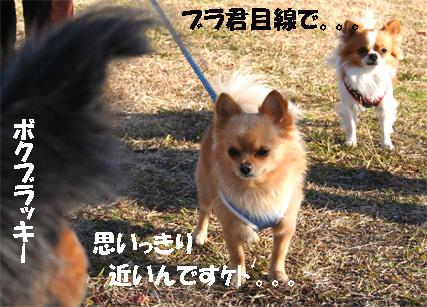 chiwawa8.jpg