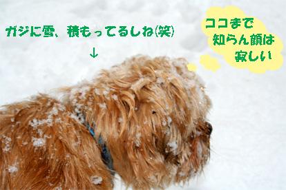 gaji080212-3.jpg