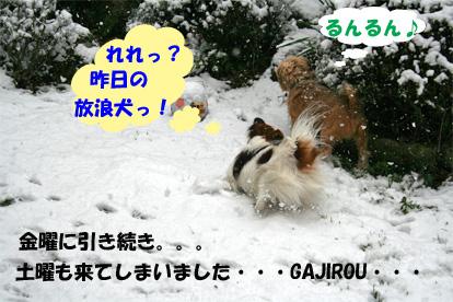 gajikota080210-1.jpg