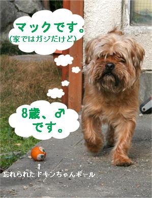 gajirou080207-1.jpg