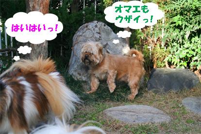 gajirou080207-10.jpg