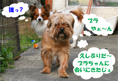 gajirou080207-3.jpg