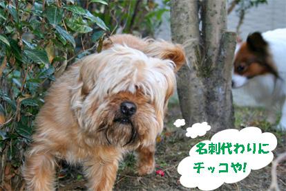 gajirou080207-4.jpg
