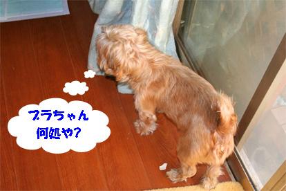 gajirou080207-5.jpg