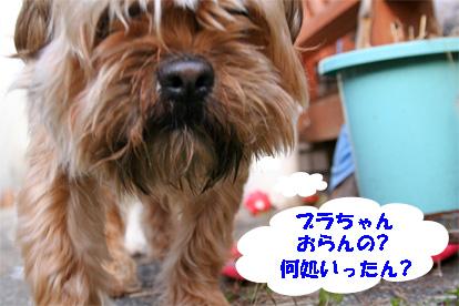 gajirou080207-6.jpg